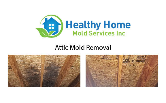 Attic Mold Remediation Mchenry IL