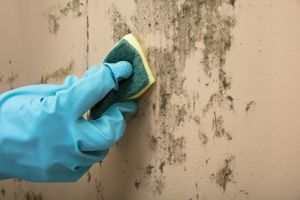 Mold Cleaning Crystal Lake