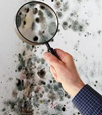 Mold Inspection Crystal Lake