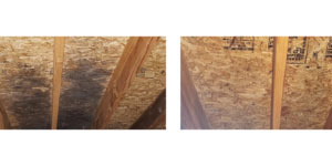 Mold Removal in McHenry IL