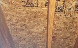 Attic Mold Remediation Algonquin