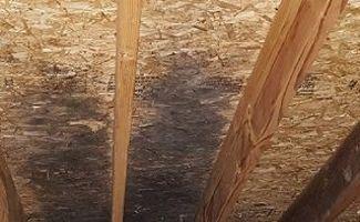 Attic Mold Removal Algonquin IL & Attic Mold Removal Algonquin IL | Healthy Home Mold Services Inc.